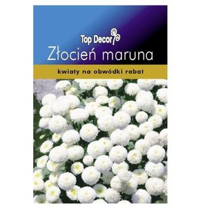 Złocień Maruna White Ball (5904842861209)